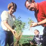 Agronomists in field