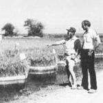 Don Seaman (left), UC agronomist stationed at the Rice Experiment Station, working with CE rice specialist James Hill.