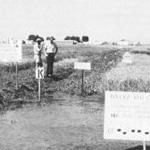 Herbicide trials at the rice experiment station, Biggs, CA, 1981